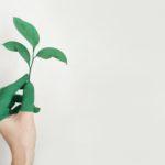 grüne hand mit pflanze die durch dünger wächst